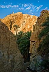 oaza górska , Tunezja
