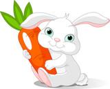 Fototapety Rabbit holds giant carrot
