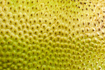 A close-up of a raw fruit jackfruit or artocarpus texture as a b