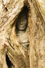 Hidden Face, Ta Prohm, Cambodia