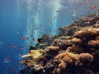 Korallenriff