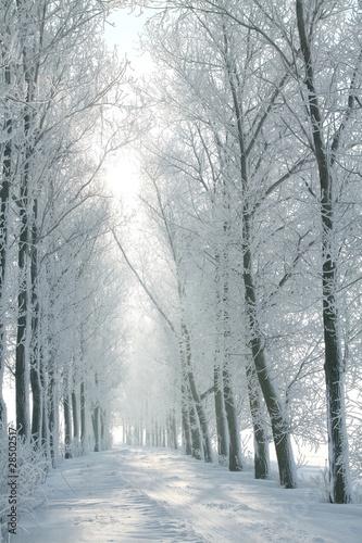 zima-wiejska-droga