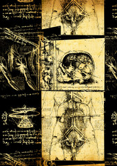 Leonardo's Da Vinci engineering & Anatomy  drawing