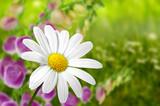 Blumen 183
