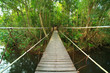 Bridge to the jungle,Khao Yai national park,Thailand