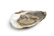 Fresh raw oyster in an open shell