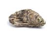 Whole single fresh raw oyster - 28518586