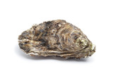 Whole single fresh raw oyster