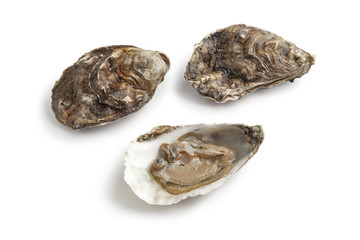 Fresh raw oysters in an open and closed shell