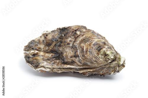Keuken foto achterwand Schaaldieren Whole single fresh raw oyster