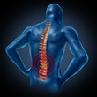 human back pain spinal cord skeleton body