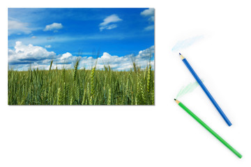 Image of green field of unripe wheat on paper with color pencils