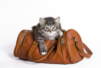 Kitten in a bag