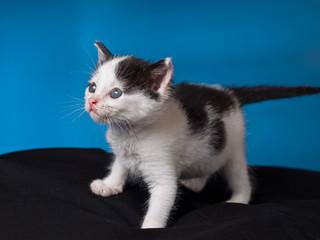 Suprised baby kitten