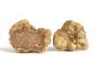 Leinwanddruck Bild - white truffle