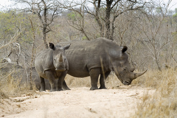 Rhino with young