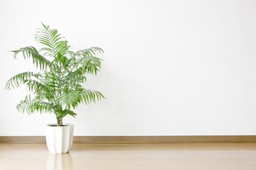 白い壁と床と観葉植物