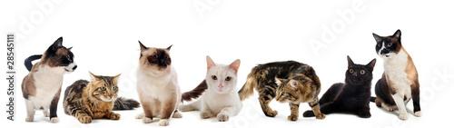 chats en studio