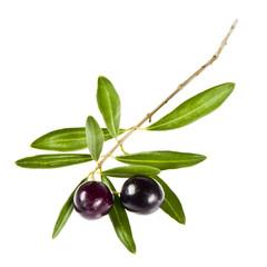 Olivenzweig, isoliert