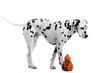 Hund Dalmatiner stehend