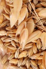 Oat with seeds