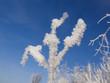 Rauhreif - Hoar Frost