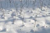Winter Simplicity poster