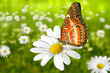 Schmetterling 101