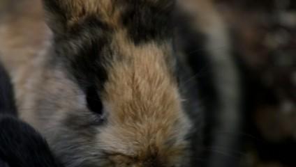 Kaninchen beim Nagen