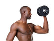Bodybuilding - Fit young man doing weight exercise