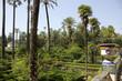 Seville - Royal Alcazar garden