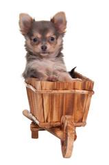 Puppy in hand cart