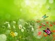 Fototapeten,flora,schmetterling,blume,grün