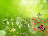 Fototapety Dreamy spring meadow