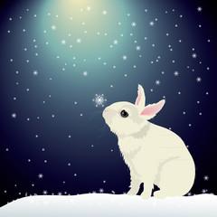 Cute bunny in snow
