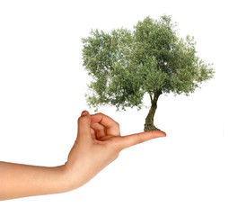 Olive tree on finger