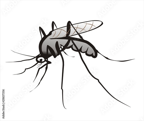 mosquito isolated sketch in black lines