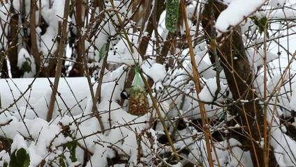 Kohlmeise sitzt auf dem Nußmeisenknödel