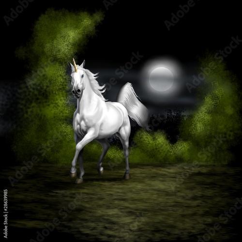 unicorno notturno