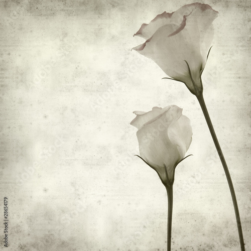 textured old paper background with white lisianthus flowers with © Tamara Kulikova