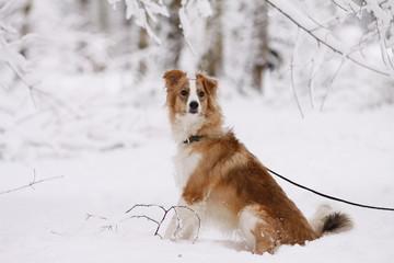 Hund im eingschneiten Wald