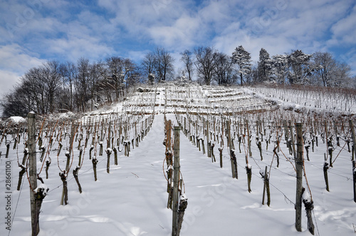 Weinberg im Winter  #101226-010