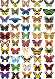Fototapety set of buttrflies