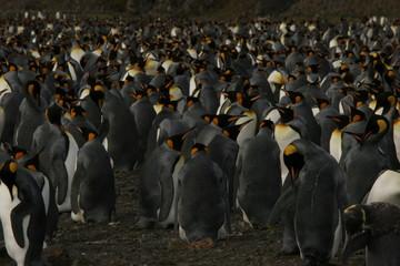 Pinguintreffen