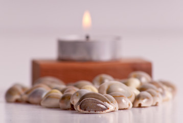 Small Shells in Shallow DoF with Candle in Background