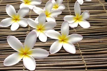 Set of frangipani flower on bamboo mat