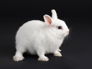 Rabbit baby.