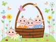 Basket with babies