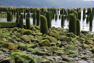 Pfähle im Wasser, Oregon - USA