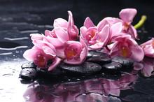 beauté des orchidées et de la pierre avec des gouttes d'eau